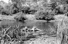 Mergaitės plaukioja Šventojoje - Nuotraukos autorius: Girčys Izidorius