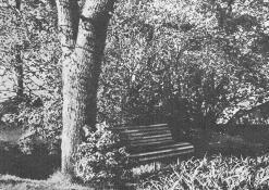 Čia mėgdavo sėdėti Antanas Vienuolis