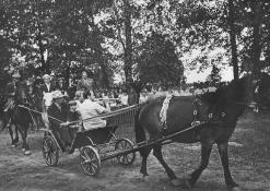 Arklys ir vežimas