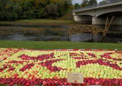 Obuolių juosta Šventosios upės krantinėje