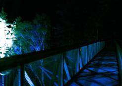 Medžių lajų komplekse - garsų ir šviesos improvizacijos (šviesų dailininkas Arvydas Buinauskas)