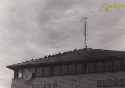 Kavinės stogas