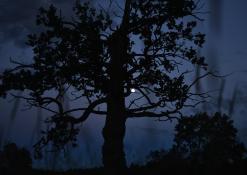 Merkiasi naktis