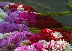 """UAB """"Ukmergės butų ūkio"""" floristinio kilimo fragmentas"""