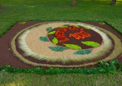 Mačionių kaimo bendruomenės floristinis kilimas