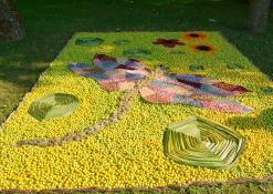 Naujųjų Elmininkų bendruomenės floristinis kilimas