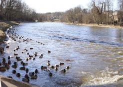 Šventosios upė - Žiemos pabaiga