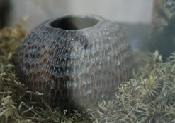 Molio vazelė