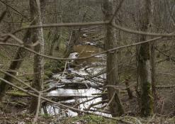 Balandžio 5 diena - Pavasarinis upelis
