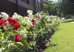 Liepos 5 diena -  Anykščių Jono Biliūno gimnazija - Rožynai