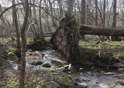 Balandžio 5 diena - Gamtos tobulumas