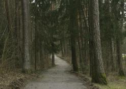 Miško keliukas