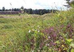 Liepos 3 diena - Vorutos piliakalnis - Čiobreliai
