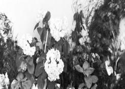 J. Biliūno kapo antkapinė plokštė