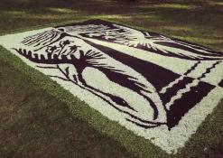 Anykščių rajono Šerių kaimo bendruomenės floristinis kilimas