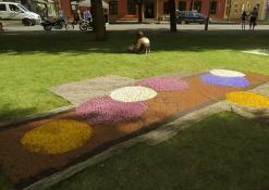 Ąžuožerių moterų klubo floristinis kilimas