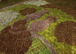Anykščių rajono Naujųjų Elmininkų bendruomenės floristinio kilimo fragmentas