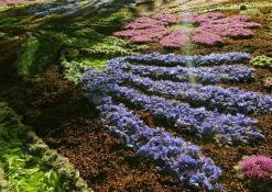 """Levaniškių bendruomenės """"Abipus Nevėžio"""" floristinio kilimo fragmentas"""