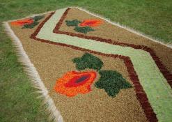 Šventės akimirka - floristinių kilimų pynimas - Naujųjų Elmininkų bendruomenės kūrinys