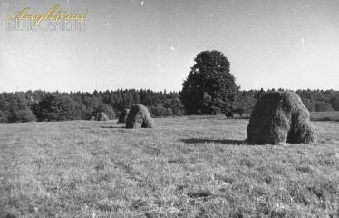 """Fotokonkursas """"Anykščiai ir apylinkės"""" (1990) - Šienapjūtė Gojaus laukuose prie Vorutos piliakalnio"""