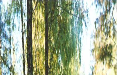 """Fotokonkursas """"Anykščiai ir apylinkės"""" (2007) - Šilelis"""