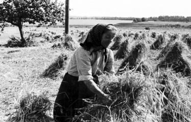 """Fotokonkursas """"Anykščiai ir apylinkės"""" (1957) - Vasaros darbai"""