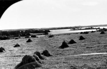 """Fotokonkursas """"Anykščiai ir apylinkės"""" (1957) - Javų laukas"""