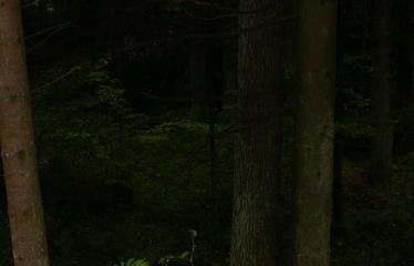 """Fotokonkursas """"Anykščiai ir apylinkės"""" (2009) - Miškas"""