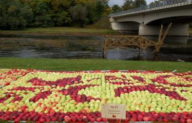 """Derliaus šventė """"Obuolinės"""" (2016) - Aukštaitiškos juostos dėlionė iš obuolių - Obuolių juosta Šventosios upės krantinėje"""