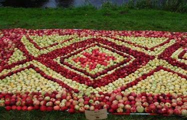 """Derliaus šventė """"Obuolinės"""" (2016) - Aukštaitiškos juostos dėlionė iš obuolių - Obuolių juostos fragmentas"""