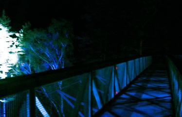 Turizmo naktis - Pramoginio traukinuko kelionė nuo Dainuvos slėnio link Medžių lajų tako komplekso - Medžių lajų komplekse - garsų ir šviesos improvizacijos (šviesų dailininkas Arvydas Buinauskas)