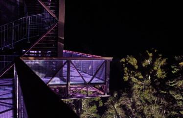 Turizmo naktis - Pramoginio traukinuko kelionė nuo Dainuvos slėnio link Medžių lajų tako komplekso - Šviesų instaliacija