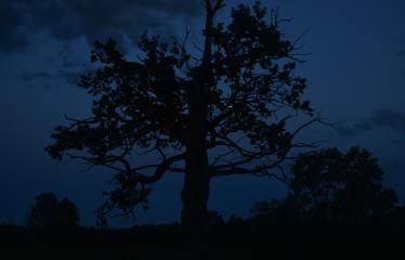 """Fotokonkursas """"Anykščiai ir apylinkės"""" (2017) - Merkiasi naktis"""