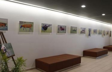 Žilvino Prano Smalsko medinių skulptūrų fotografijų paroda - Ekspozicija