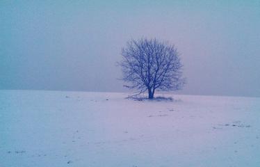 """Fotokonkursas """"Anykščiai ir apylinkės"""" (2014) - Žiema"""
