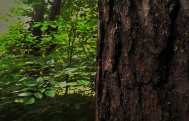 """Fotokonkursas """"Anykščiai ir apylinkės"""" (2015) - Miškas"""