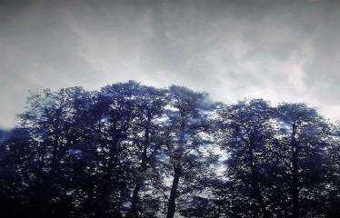 """Fotokonkursas """"Anykščiai ir apylinkės"""" (2016) - Medžiai"""