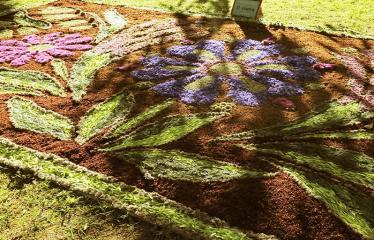 """Anykščių miesto šventė (2017) - """"ŠvenČIA ANYKŠČIAI"""" - Floristinių kilimų pynimas ir paroda - Levaniškių bendruomenės """"Abipus Nevėžio"""" floristinio kilimo fragmentas"""