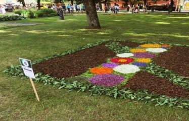 """Anykščių miesto šventė (2017) - """"ŠvenČIA ANYKŠČIAI"""" - Floristinių kilimų pynimas ir paroda - Raguvėlės moterų klubo floristinis kilimas"""