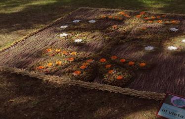 """Anykščių miesto šventė (2017) - """"ŠvenČIA ANYKŠČIAI"""" - Floristinių kilimų pynimas ir paroda - Debeikių moterų veiklos centro floristinis kilimas"""
