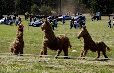 """35-oji Respublikinė tradicinės kultūros ir žirgų sporto šventė """"Bėk bėk, žirgeli!"""" (2014) - Šiaudinės skulptūros"""