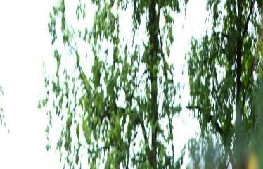 """Valstybės (Lietuvos karaliaus Mindaugo karūnavimo) diena (2017) - Valstybės vėliavos pakėlimo ceremonija / Koncertas """"Gyva padangė"""" - Šokėjai"""