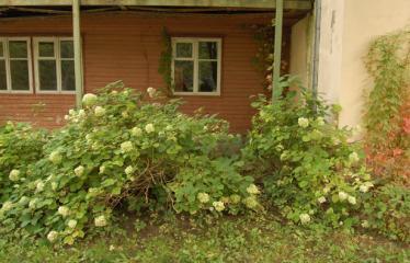 """Kreivo kino ir dekadanso savaitgalis """"TWINPEAX"""" (2006) - Antroji diena - Poilsio namai"""