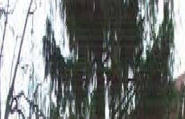 """Fotokonkursas """"Anykščiai ir apylinkės"""" (2014) - Užgavėnių šventė Naujųjų Elmininkų bendruomenėje"""